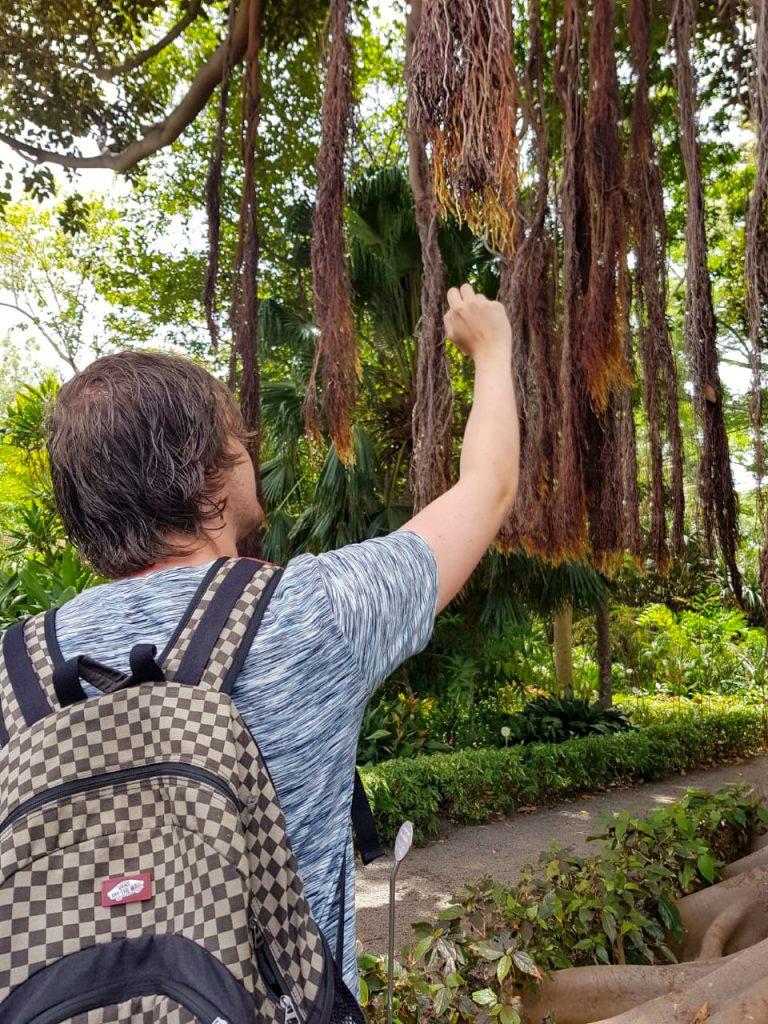 Botanische tuin lianen
