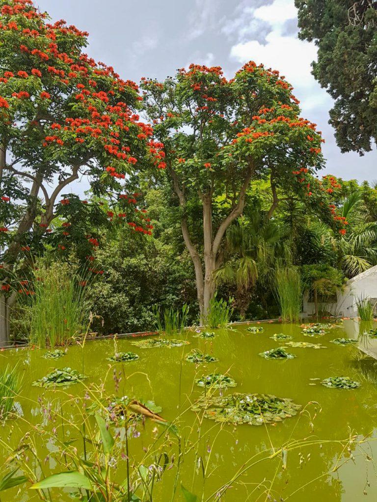 Botanische tuin vijver