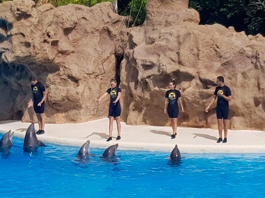 Dolfijnenshow Loro Parque