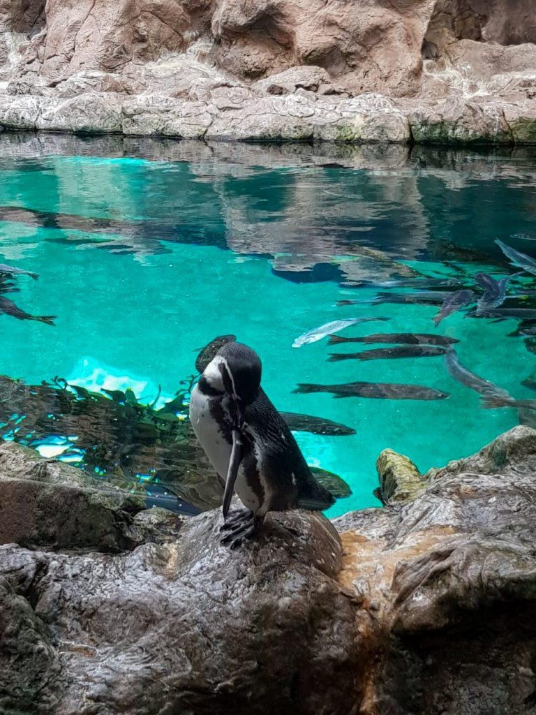 Pinguin Loro Parque