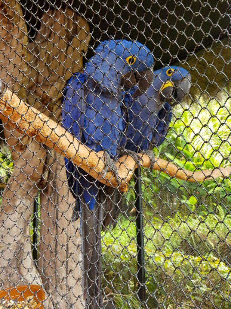 Papegaaien Loro Parque