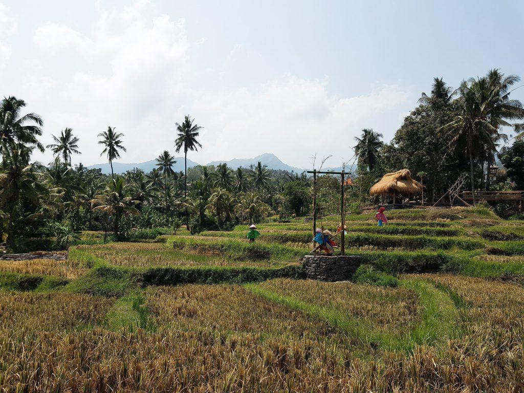 Uitzicht onderweg naar Aling Aling
